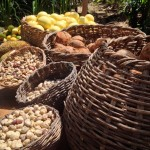 Nicaraguan nonprofit impact: Thousands with improved food security!