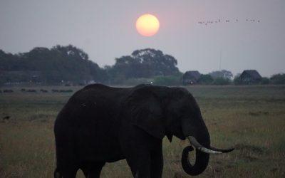 Wanderful Zambia + Botswana Trip: In Photos!!